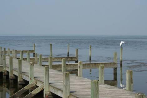 Egret Fishing For Breakfast, Corolla, NC